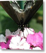 Butterfly Cup Metal Print