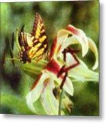 Butterfly Daylily Metal Print