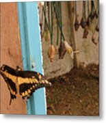 Butterfly Drying His New Wings Metal Print