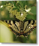 Butterfly From Another Side Metal Print