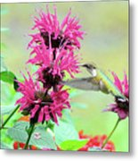 Butterfly Garden 25 Metal Print