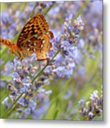 Butterfly Heaven Metal Print