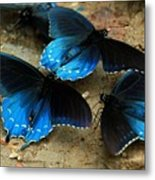 Butterfly Huddle At The Puddle Metal Print by Randy Matthews