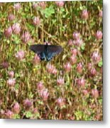 Butterfly In Clover Metal Print