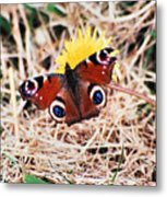 Butterfly In Ireland Metal Print