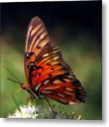 Butterfly In Orton Metal Print