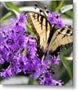 Butterfly In Summer Metal Print