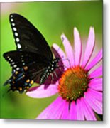 Butterfly In The Sun Metal Print