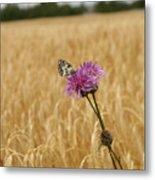 Butterfly In Wheat Field Metal Print