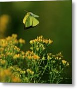 Butterfly-ing Metal Print