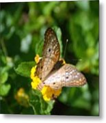 Butterfly Land Metal Print