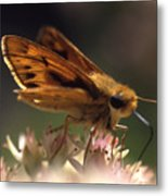 Butterfly-lick Metal Print
