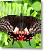 Butterfly Maze Metal Print