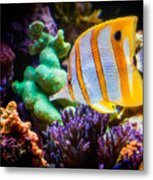 Butterfly Of The Sea Metal Print