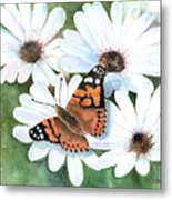 Butterfly On A Daisy Metal Print