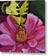 Butterfly On A Pink Daisy Metal Print