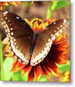 Butterfly On A Sunset Metal Print