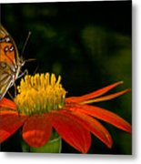 Butterfly On Blossom Metal Print
