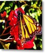 Butterfly On Bougainvillea Metal Print