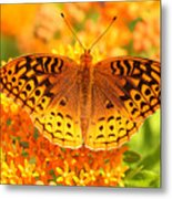 Butterfly On Butterfly Weed Metal Print