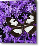Butterfly On Campanula Get Mee Metal Print
