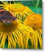 Butterfly On Chrysanthemum Flowers Metal Print