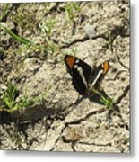 Butterfly On Cracked Ground Metal Print