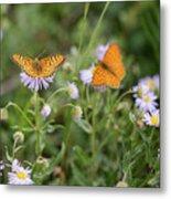 Butterfly On Fleabane #2 Metal Print