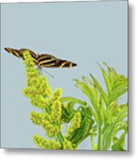 Butterfly On Flower Cluster Metal Print