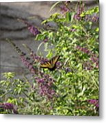 Butterfly On Flowers Metal Print