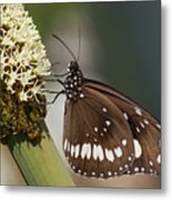 Butterfly On Grass Tree Flowers Metal Print