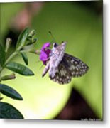 Butterfly On Heather Metal Print