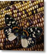 Butterfly On Indian Corn Metal Print