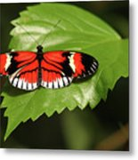 Butterfly On Large Leaf Metal Print