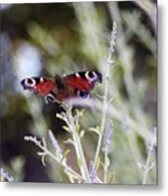 Butterfly On Lavender Metal Print