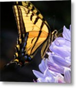 Butterfly On Lilly Metal Print
