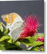 Butterfly On Magenta Flower Metal Print