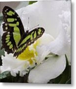 Butterfly On Orchid Metal Print