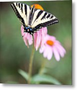 Butterfly On Pink Cone Flower Metal Print