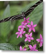 Butterfly On Pink Flowers Metal Print