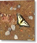 Butterfly On The Beach Metal Print
