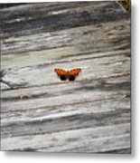 Butterfly On The Dock Metal Print