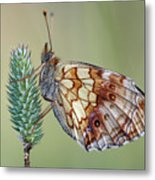 Butterfly On The Grass Metal Print