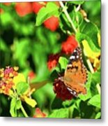 Butterfly On The Red Flower 2 Metal Print