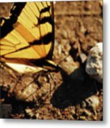 Butterfly On The Rocks Metal Print