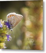 Butterfly On The Spot Metal Print