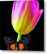 Butterfly On Yellow Pink Tulip Metal Print