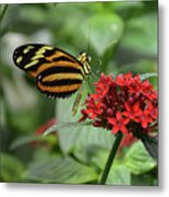 Butterfly Orange And Yellow Metal Print