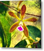 Butterfly Orchid - Encyclia Tampensis Metal Print