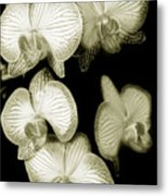Butterfly-orchids Metal Print